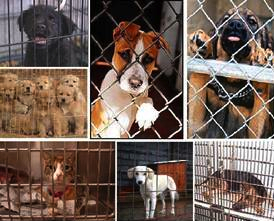 Web Image: Shelter dogs