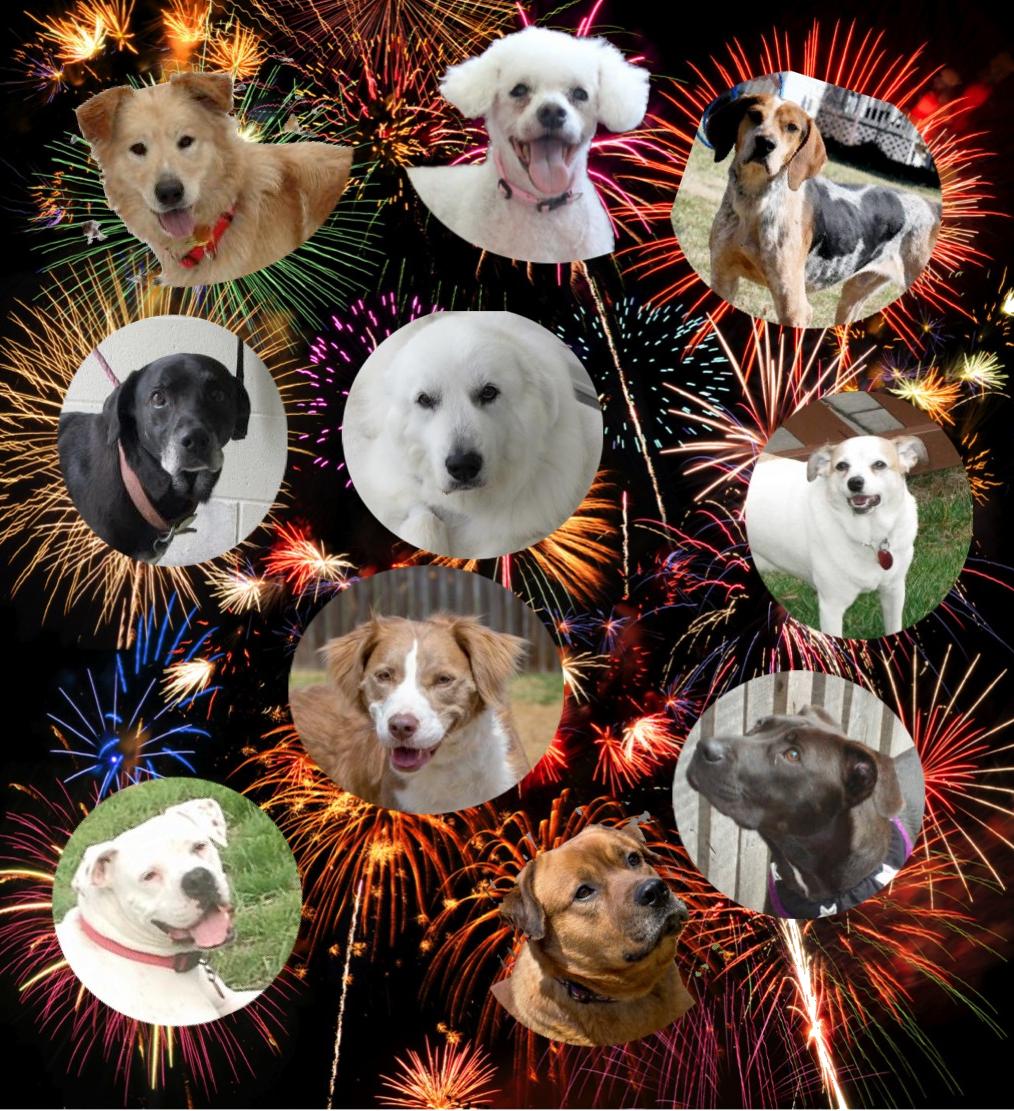 FireworksDogs1
