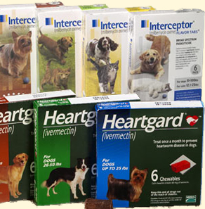 Web Image: donate - heartworm