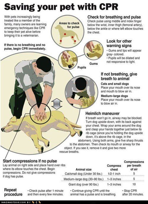 Web Image: CPR for Dogs