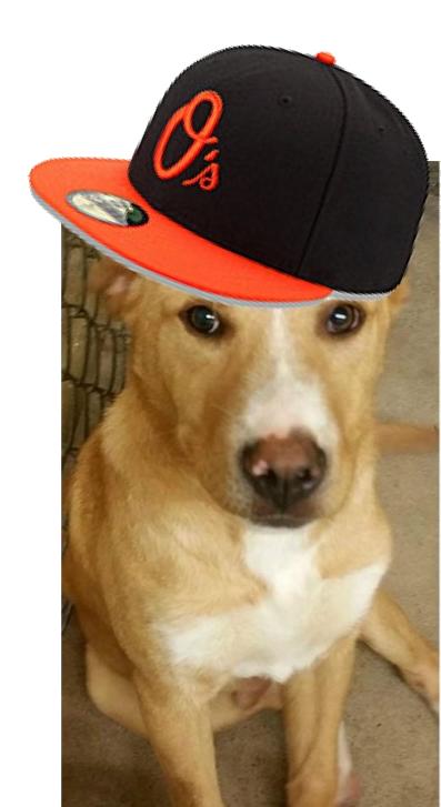 BaseballDog