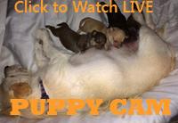 Watch Live Puppy Cam