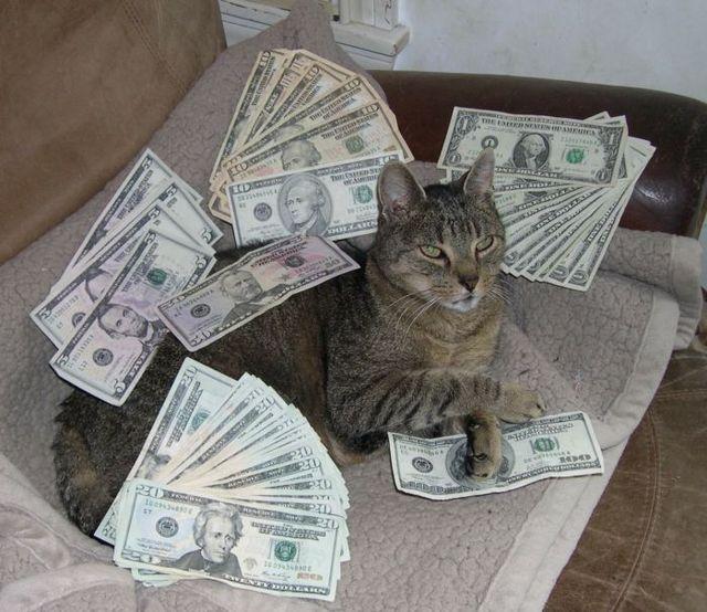 Cat with Cash
