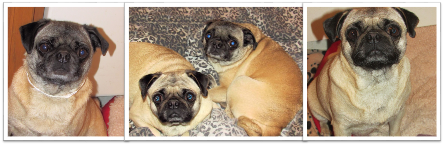 Pug Girls for a Name - 10-2014