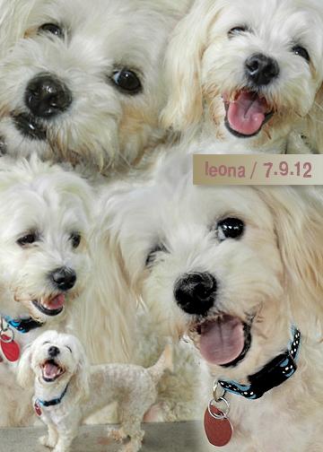 Leona's collage