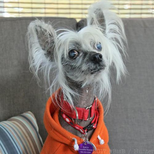 Theme simply Adult canada dog in rescue opinion you