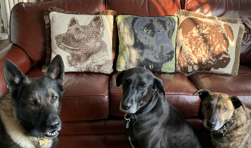 3 DOGS Pillow Fundraiser-RS