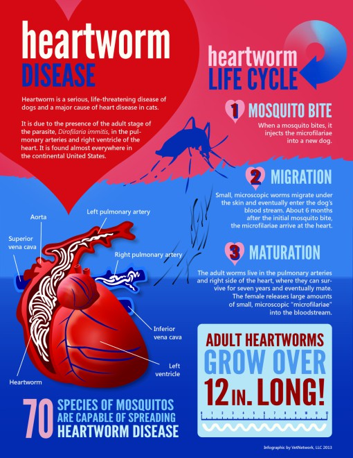 Heartworm Prevention PIC