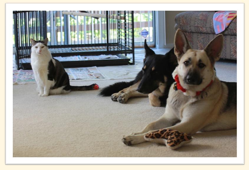 Web Image: DogsCat
