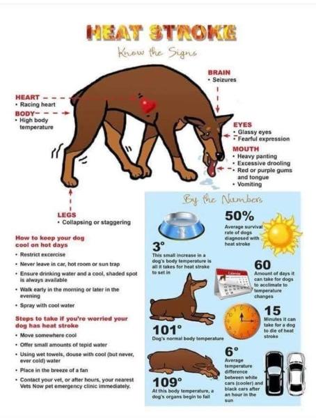 Heat Stroke Warning Signs.