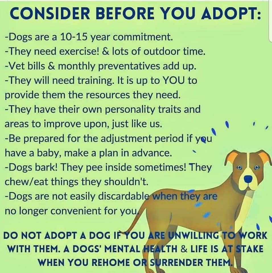 consider before adopt