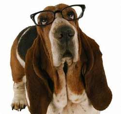 Basset with Glasses