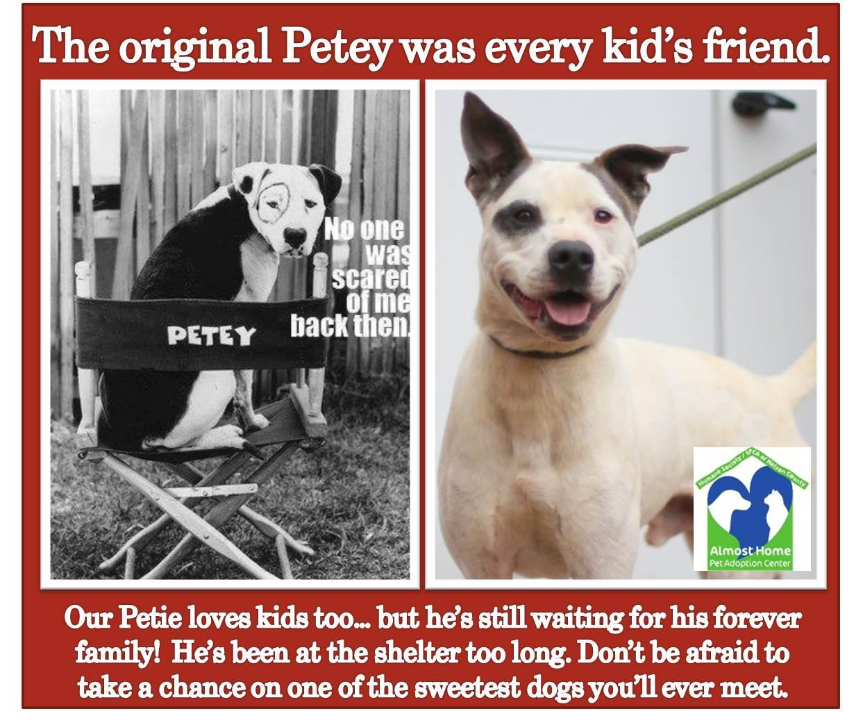 2014-09-16 Special Dog Petie