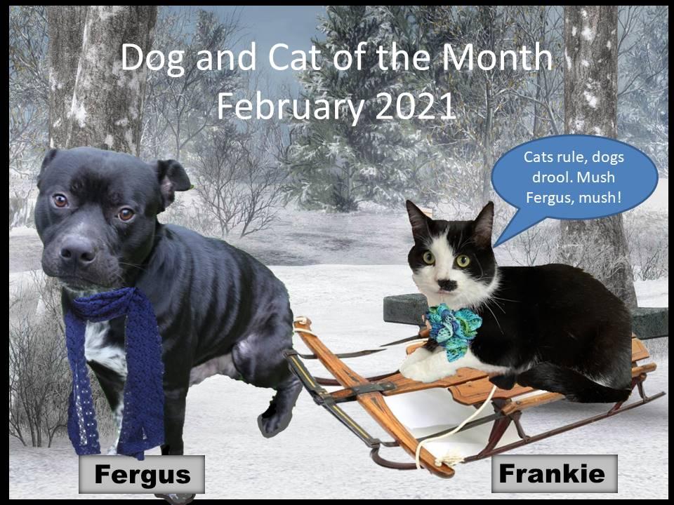 DOG COM FEB 2021
