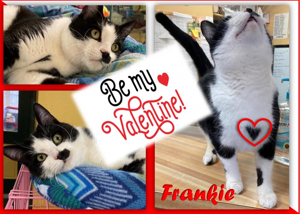 2021-02-14 frankie be my valentine