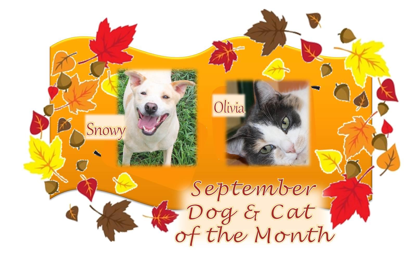 2014-09-01 - Cat & Dog Month