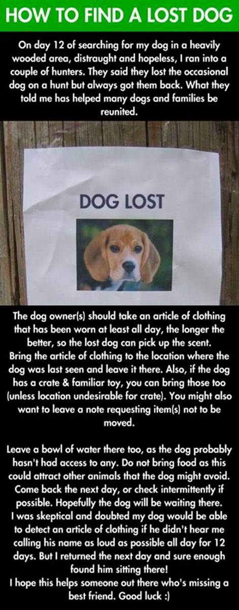 2014-01-20 - How To Find a Lost Dog
