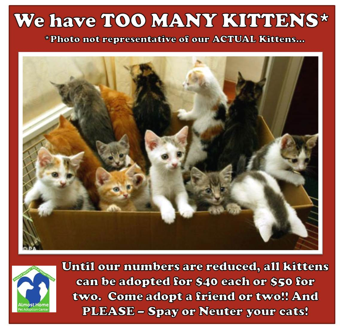 2014-09-11 Too Many Kittens