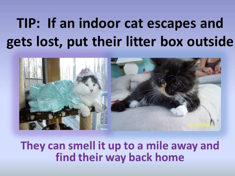 Tip Lost Cat
