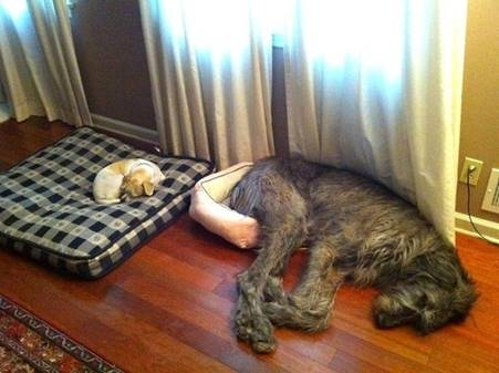 2013-12-1 - Dog Beds Needed
