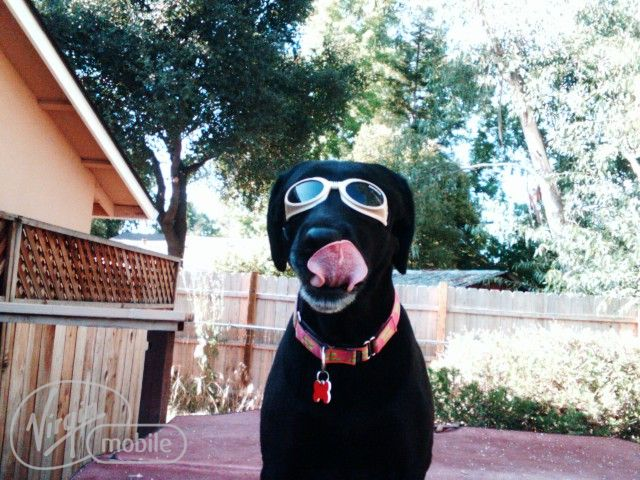 Web Image: toniglasses