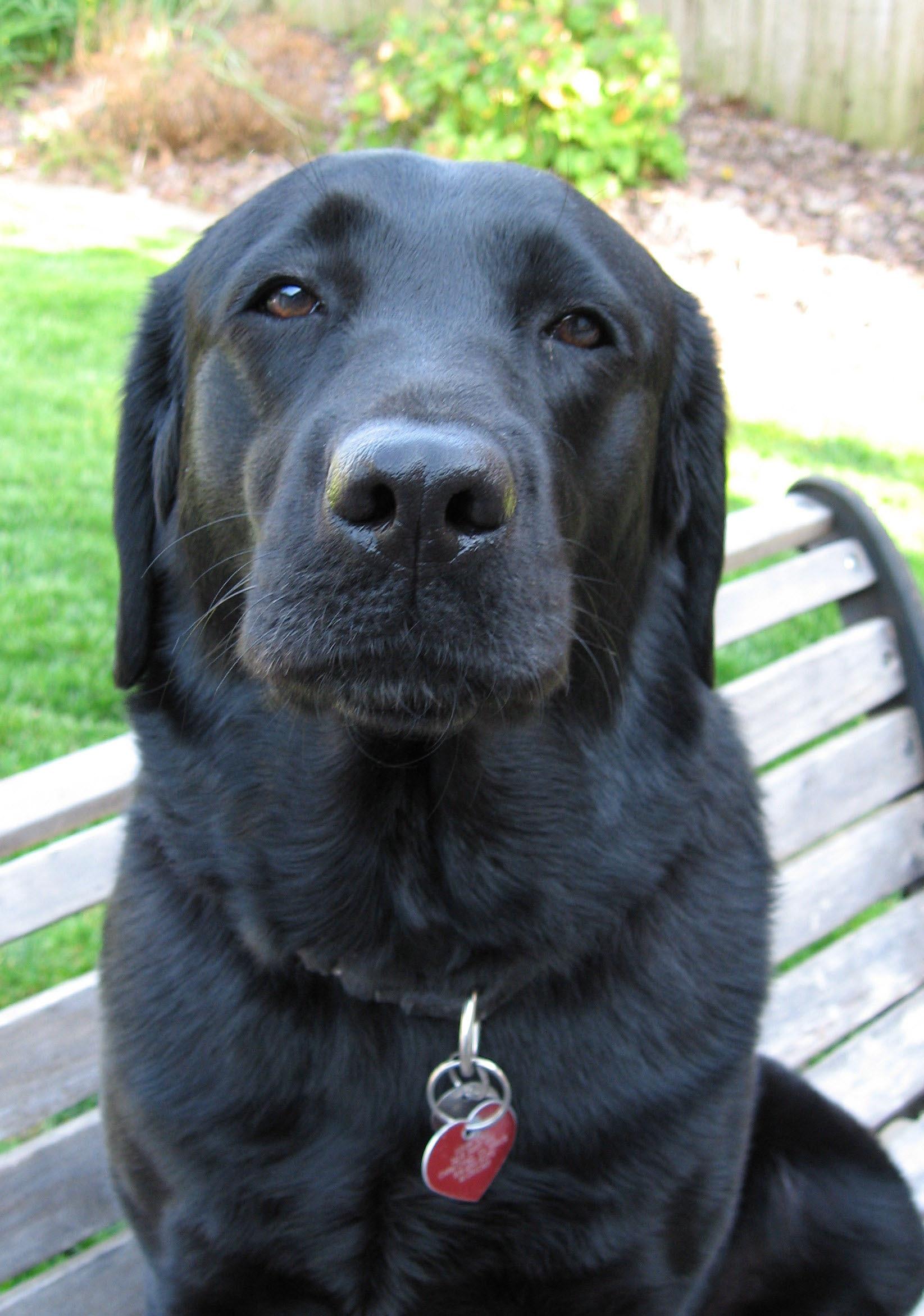 Web Image: tonispokesdog