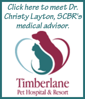 Web Image: Dr. Layton Sidebar