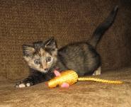Jenny small