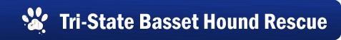 Web Image: Homepage banner