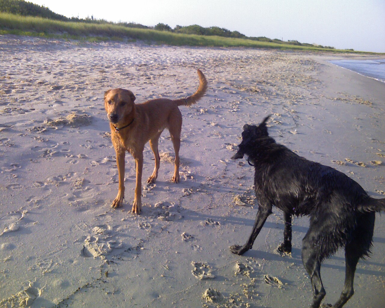 Beach- Cashew & Adonis