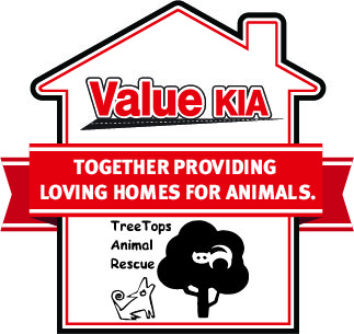 Top 10 reasons to adopt a shelter pet plate