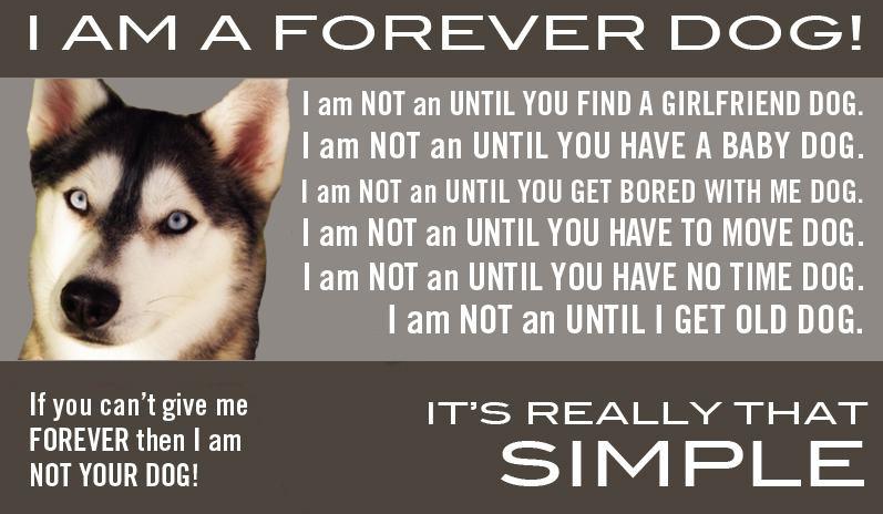 Web Image: forever dog
