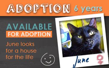 Adoption June