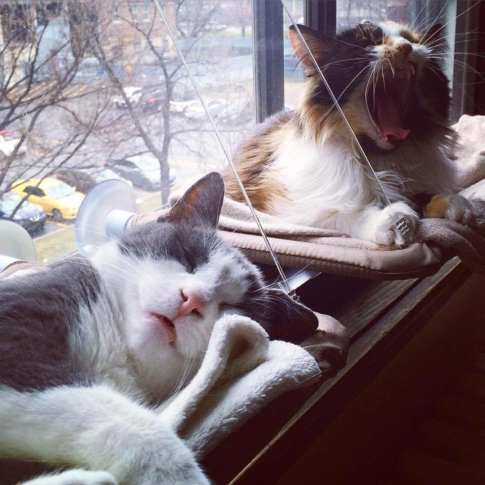 Doux adolescent chatte xxx