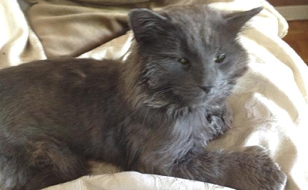 Cat Rescue Montreal Quebec