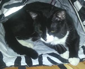 maigre noir ghetto chatte