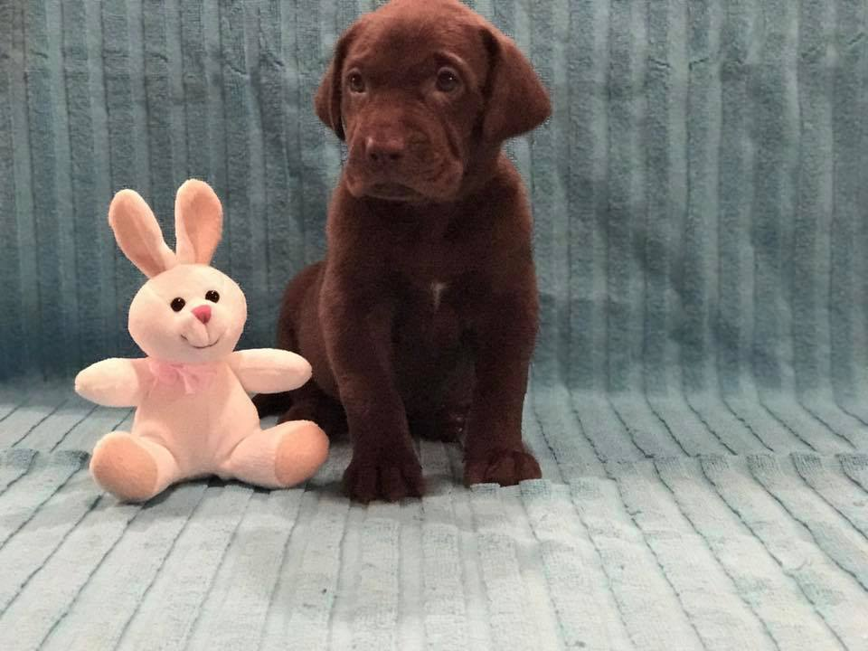 Puppy #10