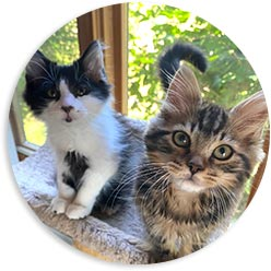 Donate to Only Maine Coons Rescue