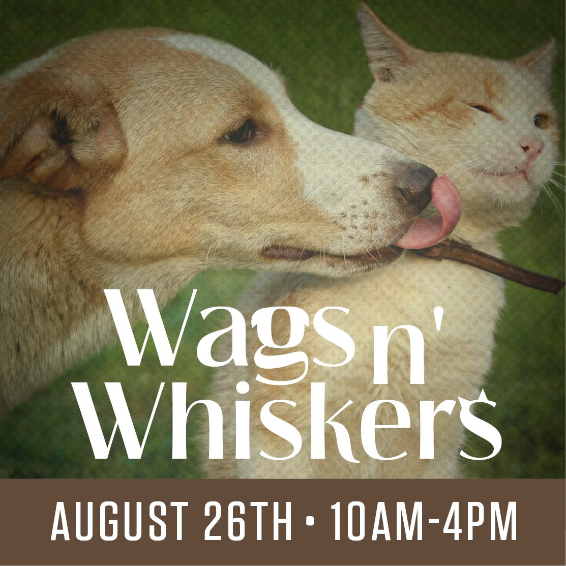 Wags N Whiskers 2017 flyer