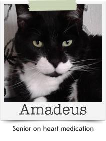 Amadeus (Bio coming soon)