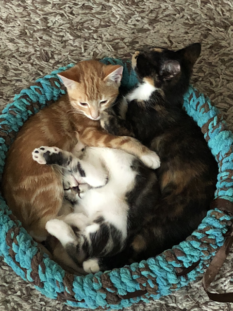 2018 Kittens in cat bed