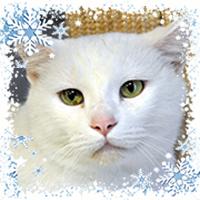 homesq-wishlist-winter