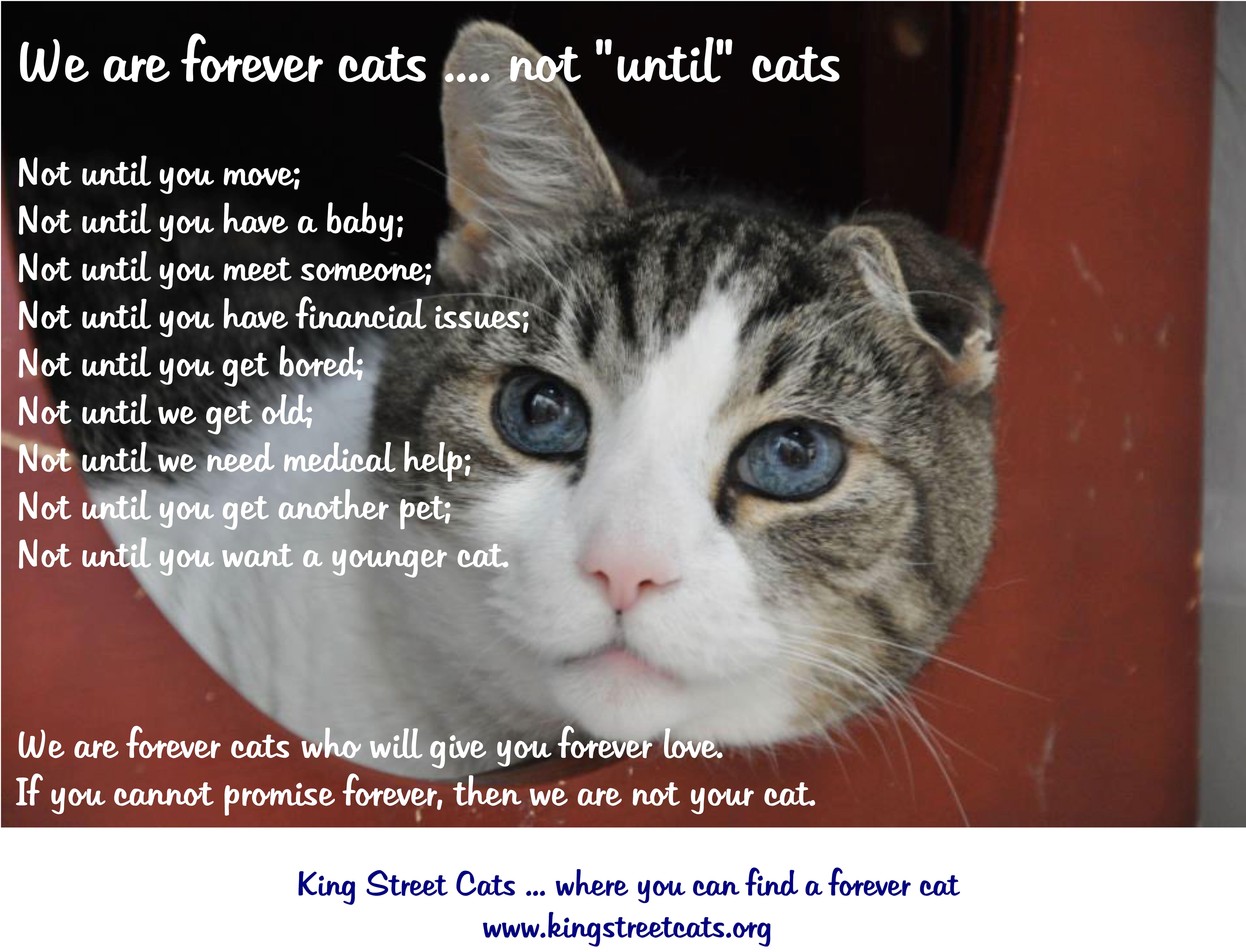 Forever Cat Poster