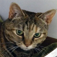 Courtney - Cat of the Month