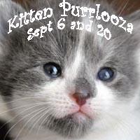 2014-kitten-purrlooza-square