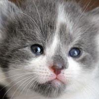 Kitten Purrlooza