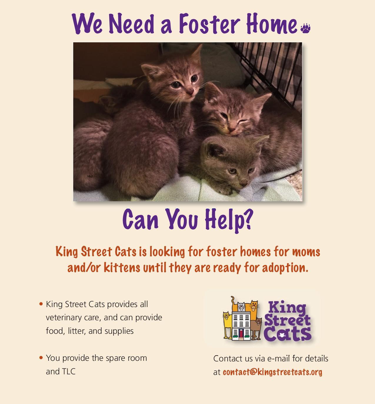2016 Kitten Foster Appeal Flyer