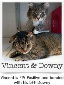 Vincent & Downy