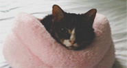 image of cat in cat bed