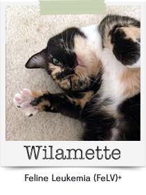 Wilamette